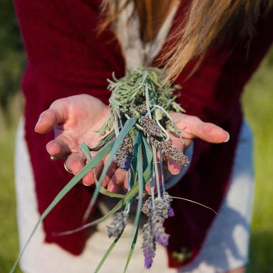 Módulo 02 - Plantas Medicinais: Cuidados Naturais & Cosmetologia